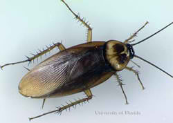 Free Your Home from Roaches with Expert Pest Control Services