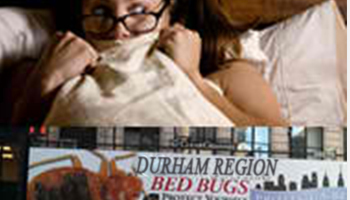 featured-bedbug