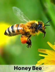 How to Tell a Bee from a Wasp