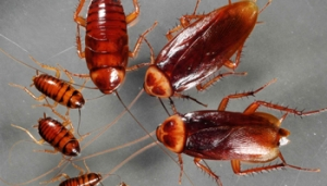 Common Pests and the Dangers They Bring to Your Homes - GT Pest Control