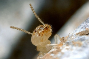 Impact of Termites on Your Homes