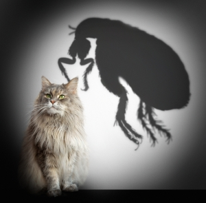 Pests from Your Pets