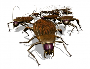 Roaches Under Your Couches